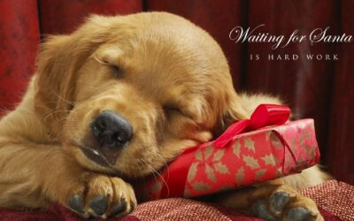 Christmas Wallpapers: Backgrounds Images & Photos 2020