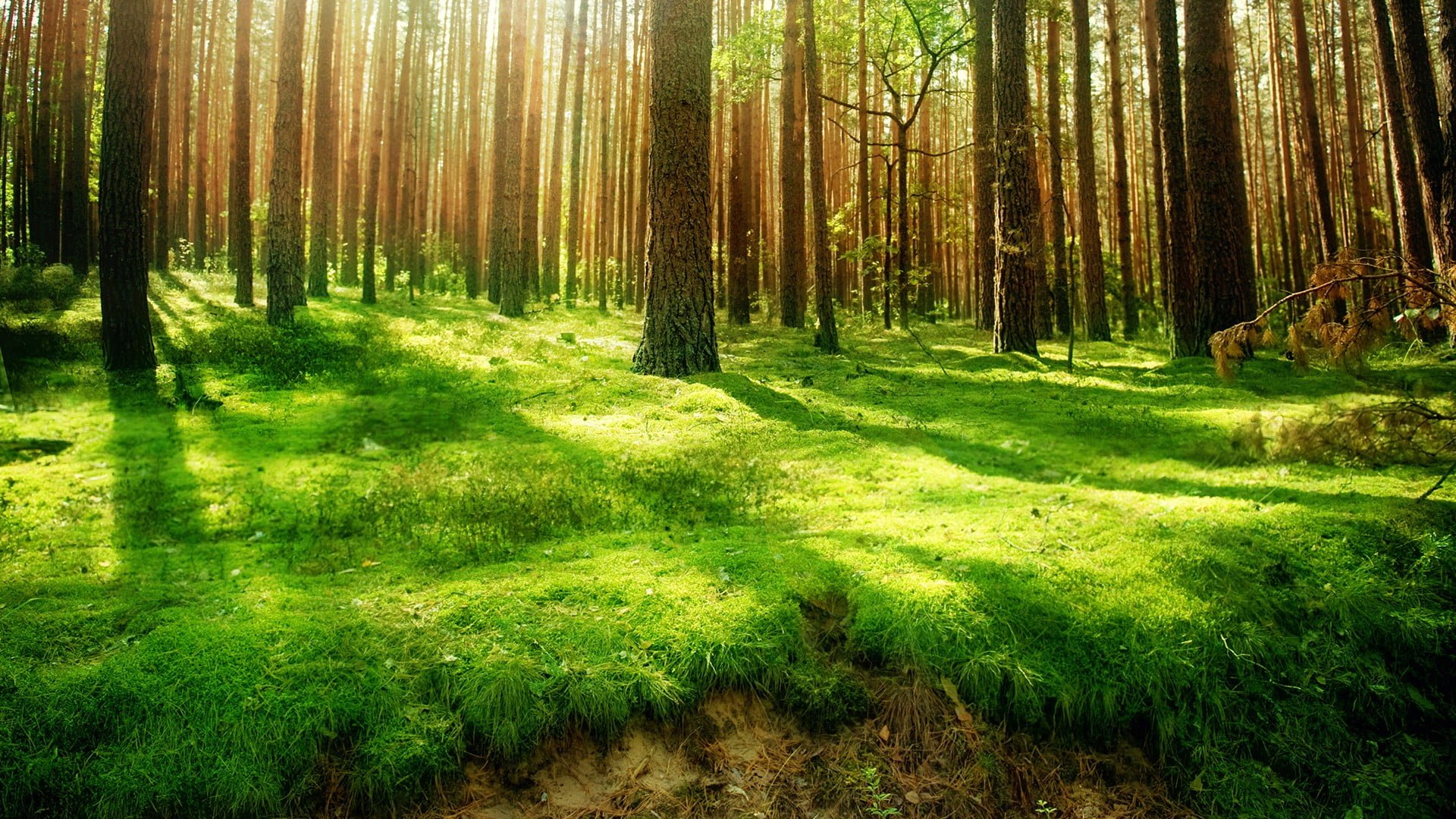 Forest Hd Wallpaper Images Backgrounds Trafoos
