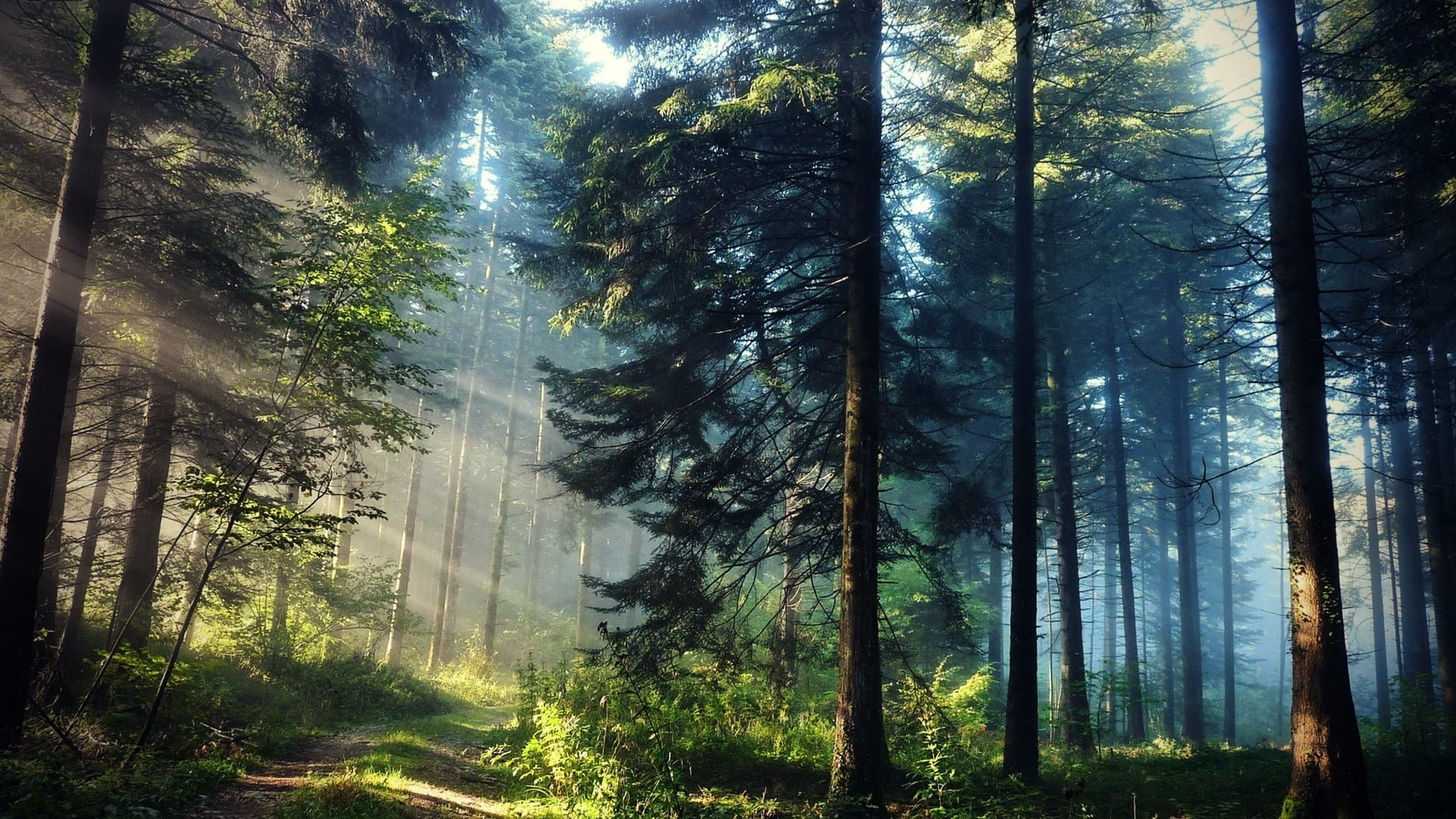 forest images