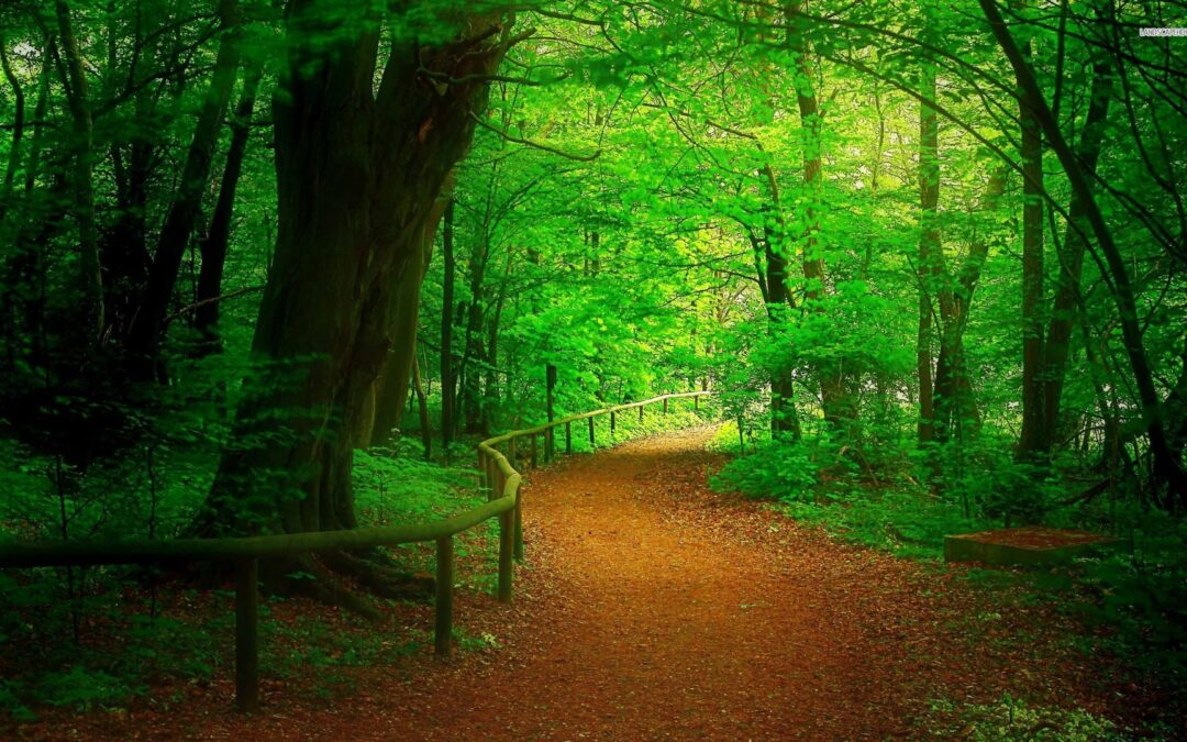 Forest HD Wallpaper Images & Backgrounds