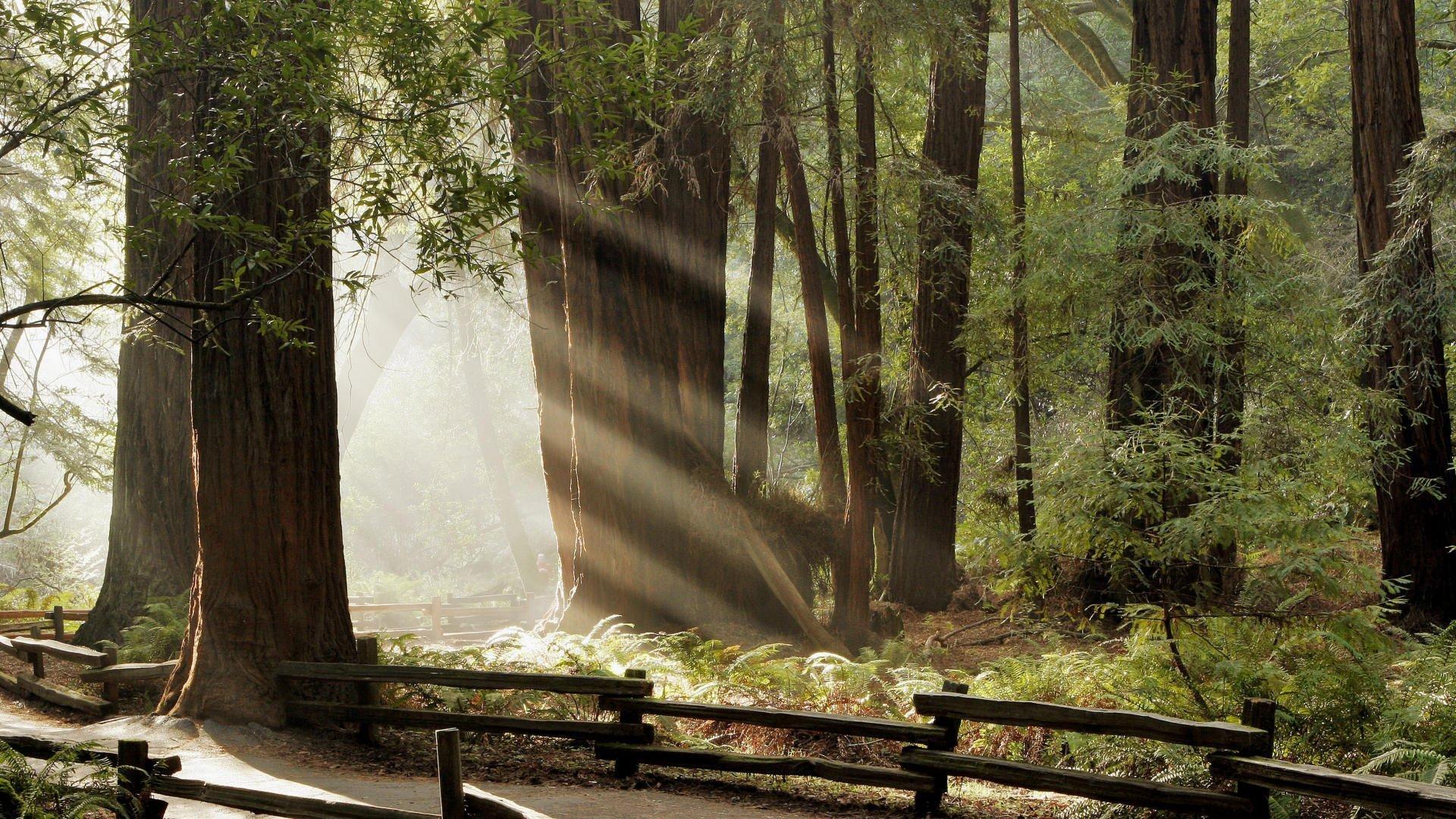 dark forest wallpaper