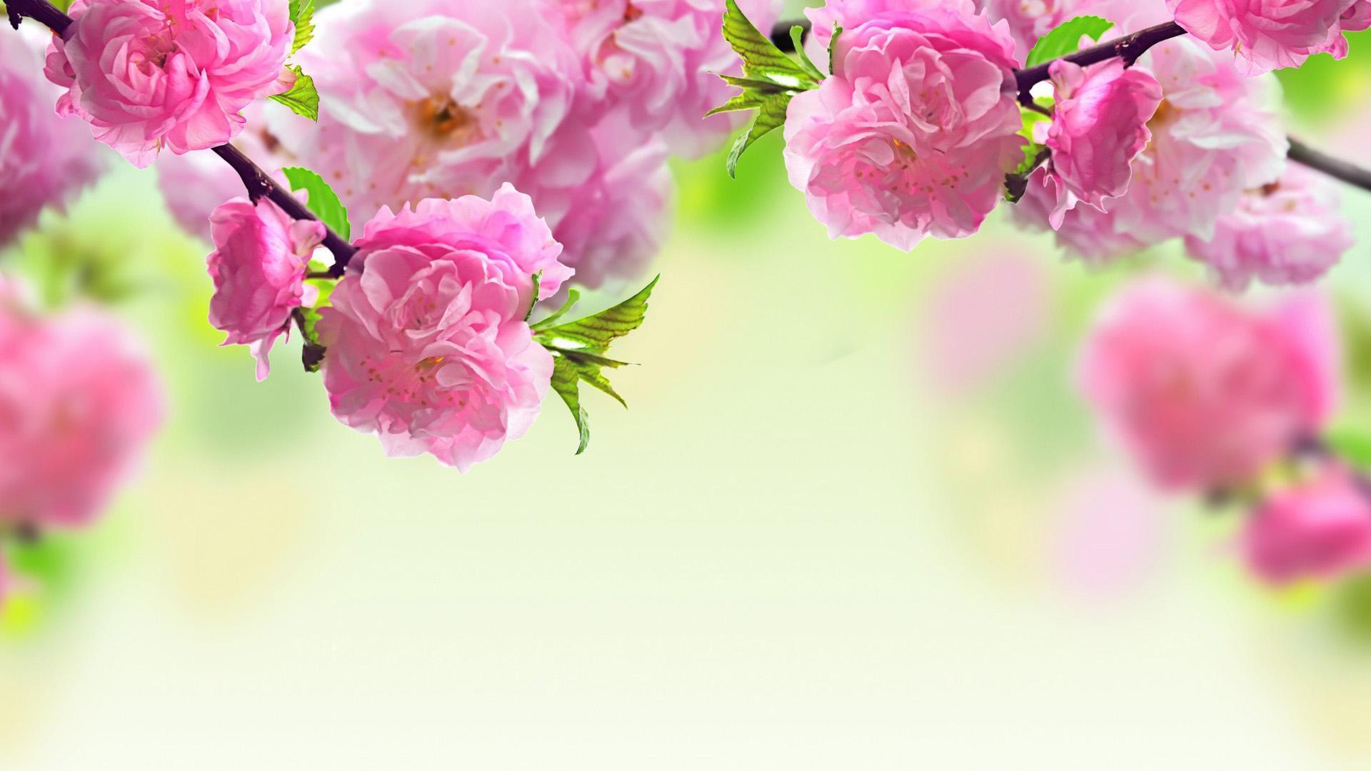 Spring Wallpaper hd download