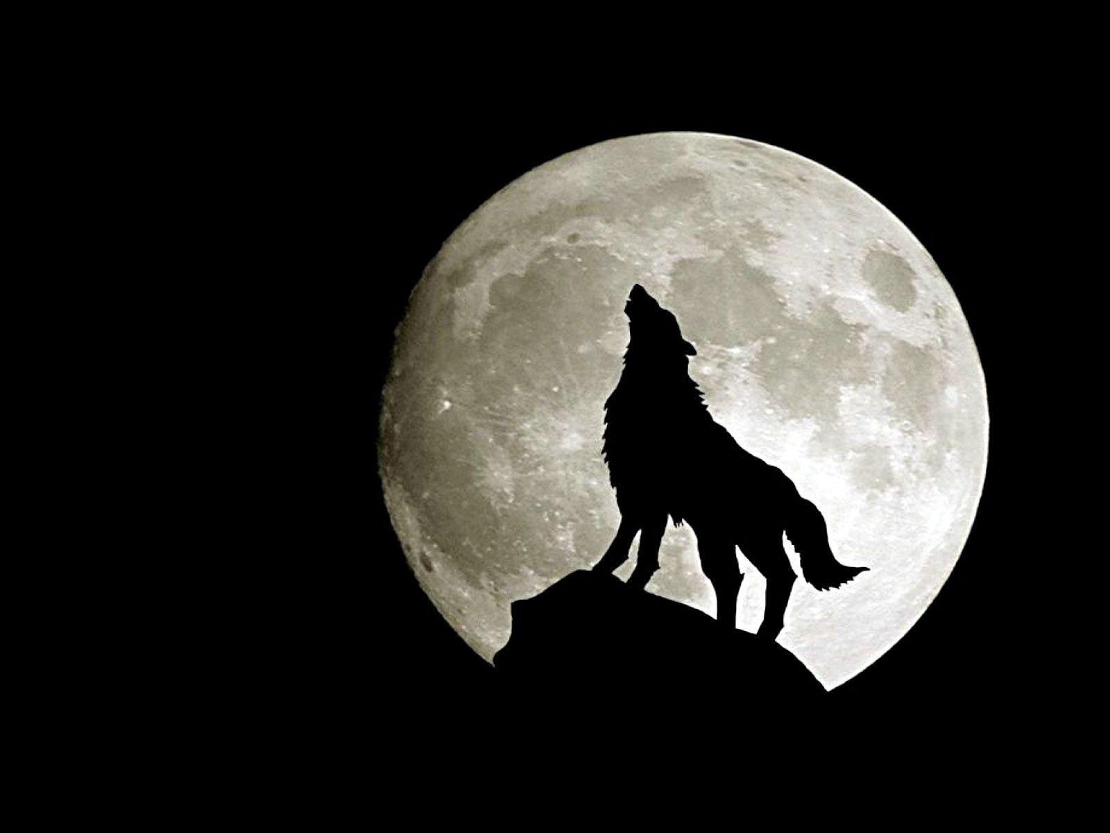 wolf wallpaper for laptop