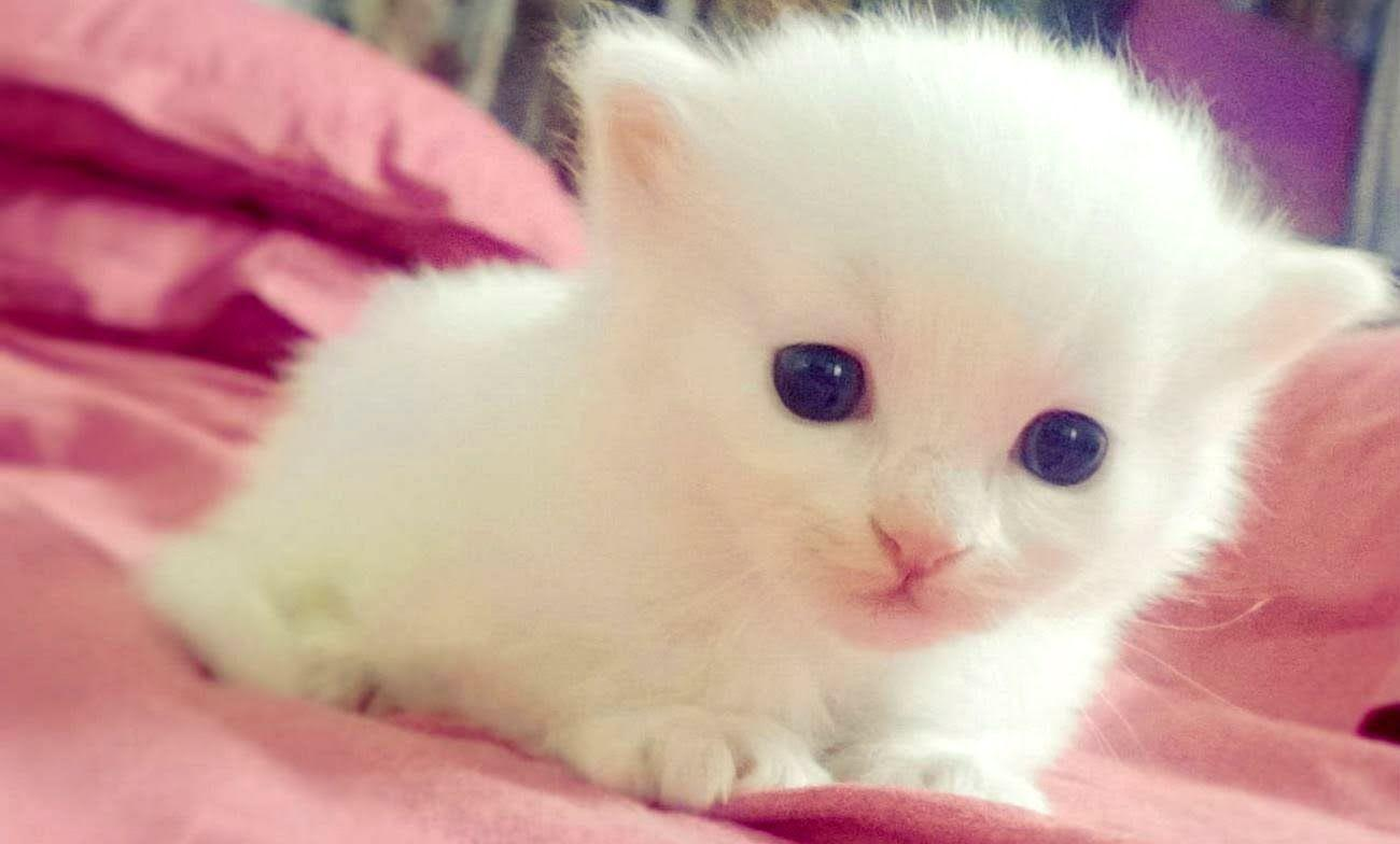 cute wallpapers for boys