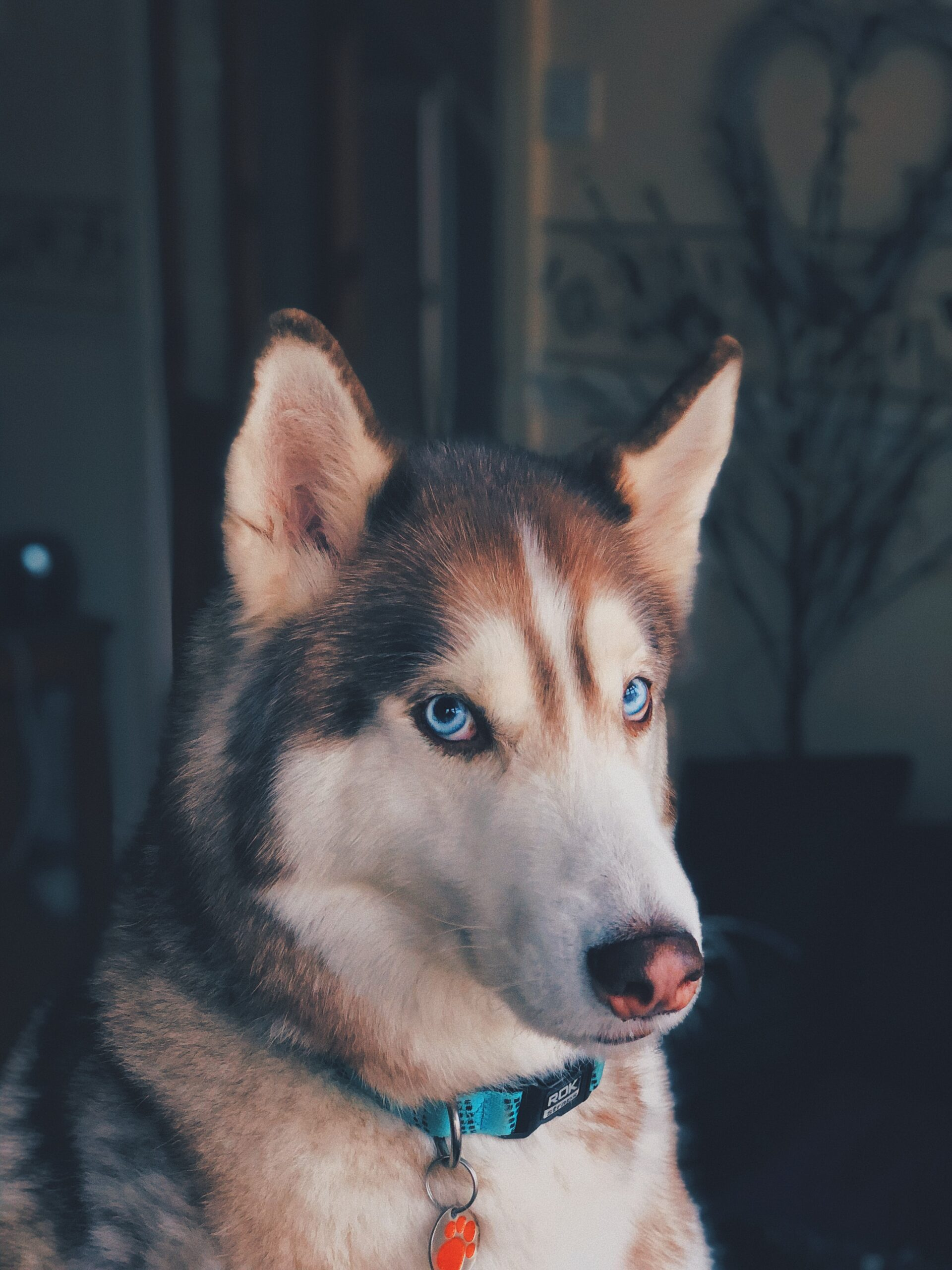 Wallpapers for Dogs