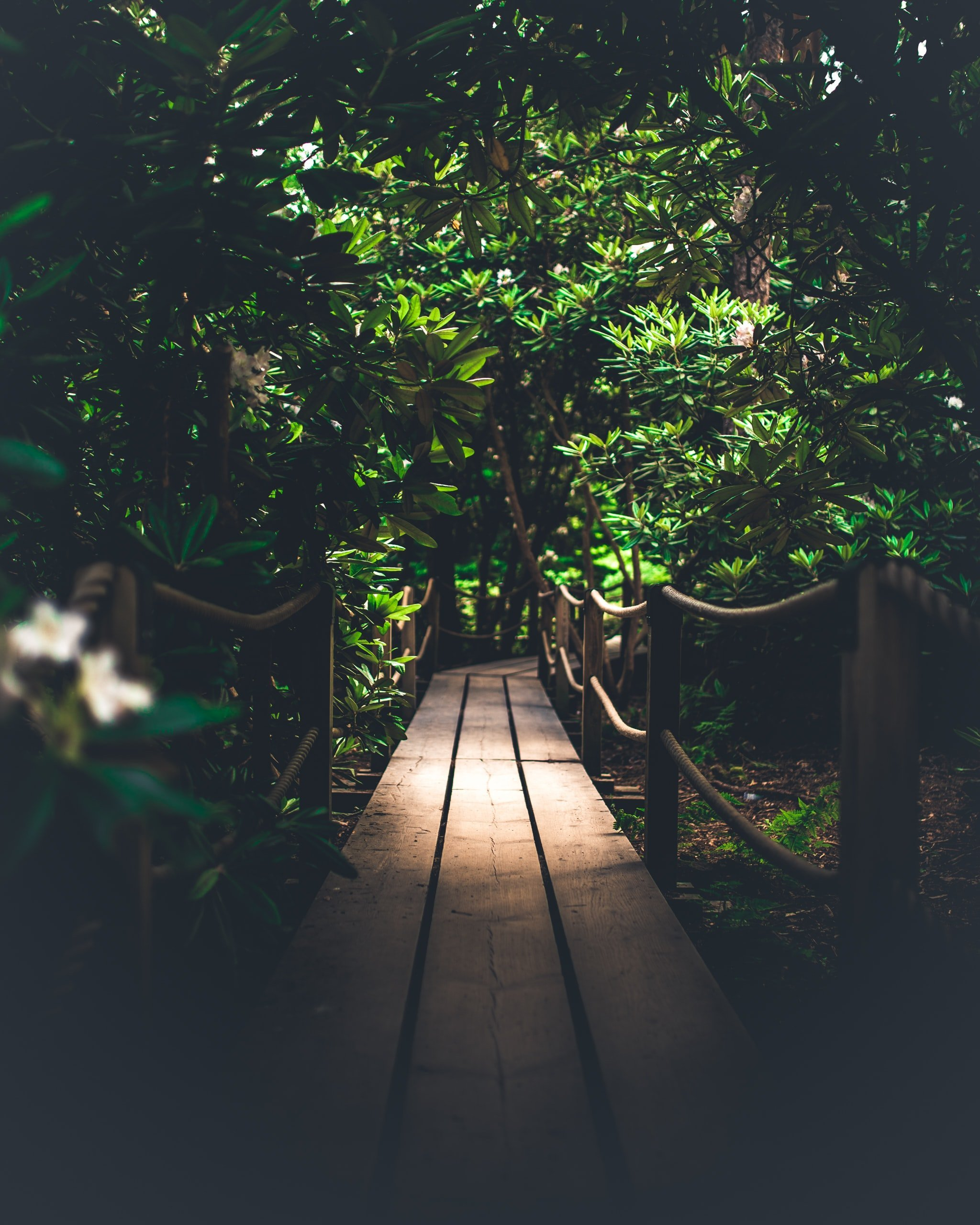Jungle wallpapers