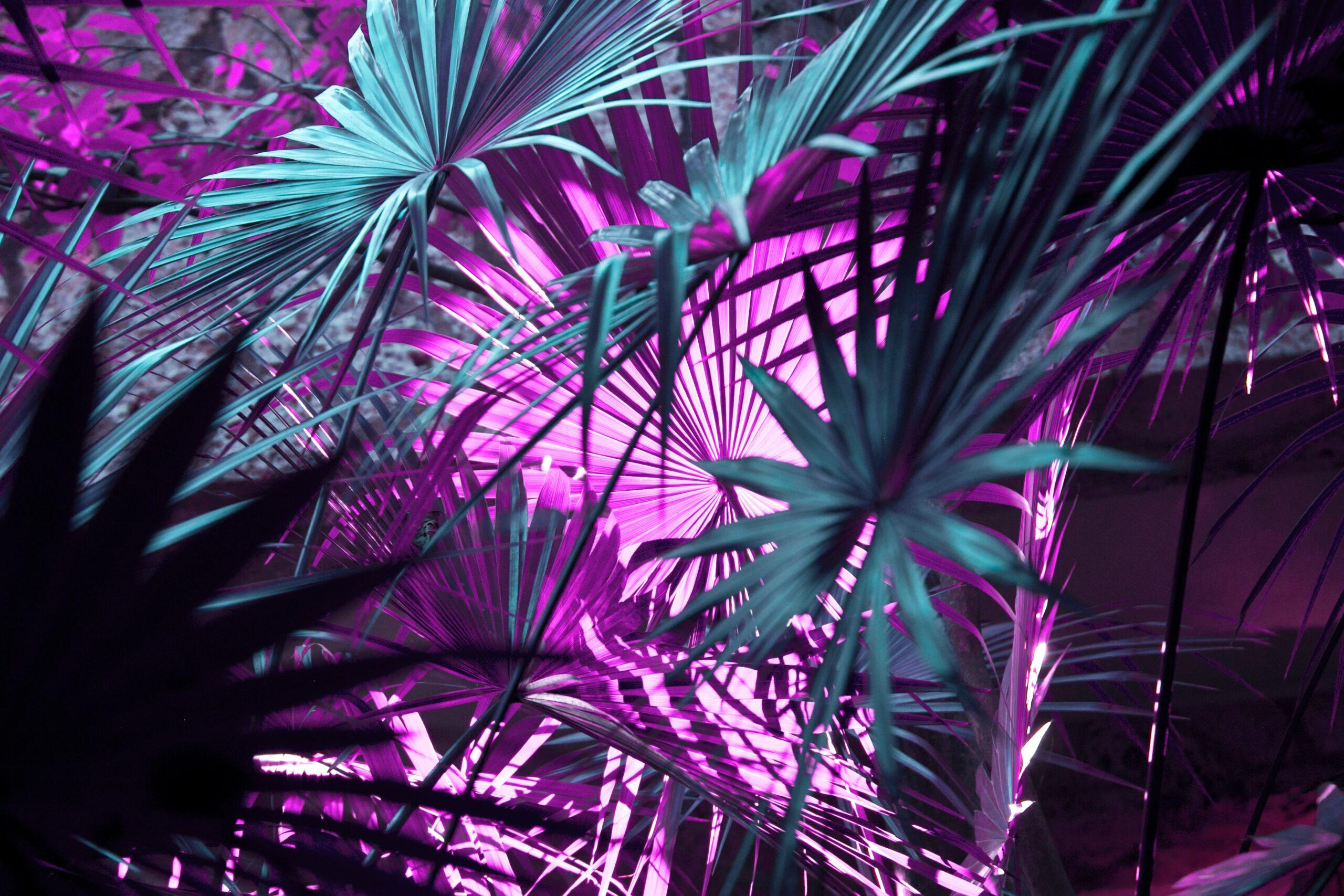 Purple Wallpapers