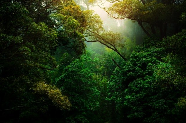 10,000+ Nature HD Wallpapers Download For free