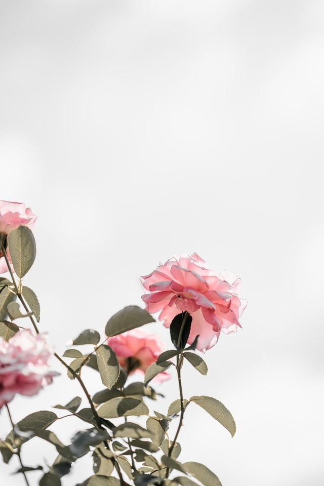 Floral Wallpapers